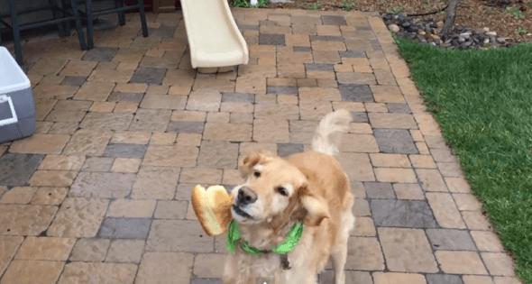 3.24.15 - hotdogFAIL