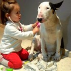 This Bull Terrier Has the Best Doctor