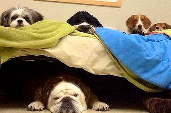 3.27.15 - Cutest Doggie Sleepovers1
