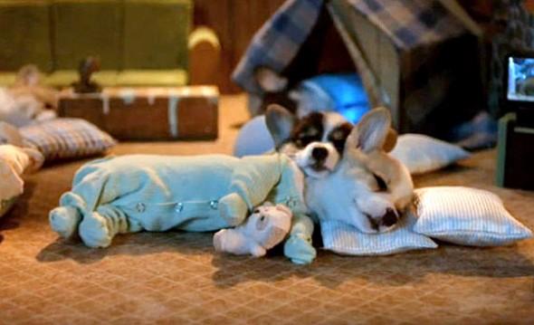 3.27.15 - Cutest Doggie Sleepovers11