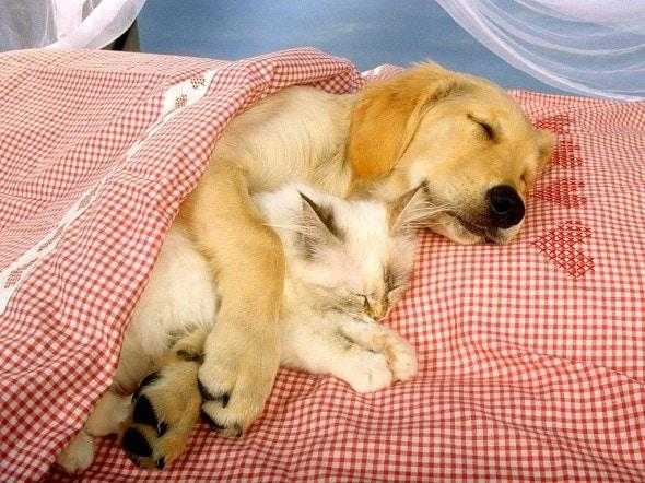 3.27.15 - Cutest Doggie Sleepovers12