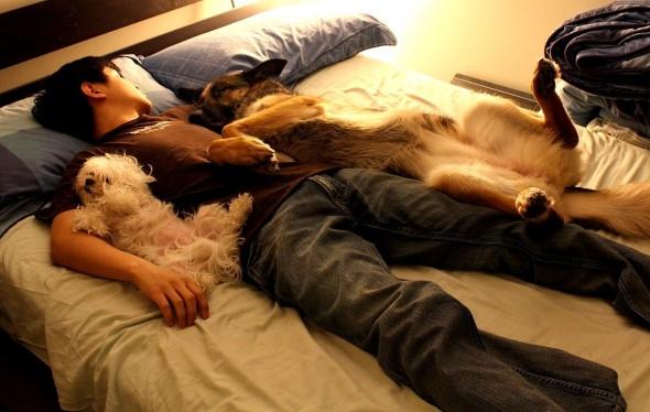 3.27.15 - Cutest Doggie Sleepovers14