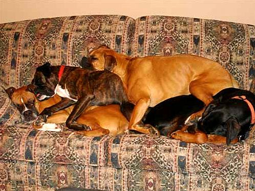 3.27.15 - Cutest Doggie Sleepovers15