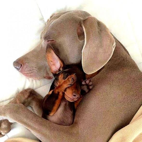 3.27.15 - Cutest Doggie Sleepovers16