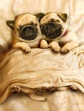 3.27.15 - Cutest Doggie Sleepovers17