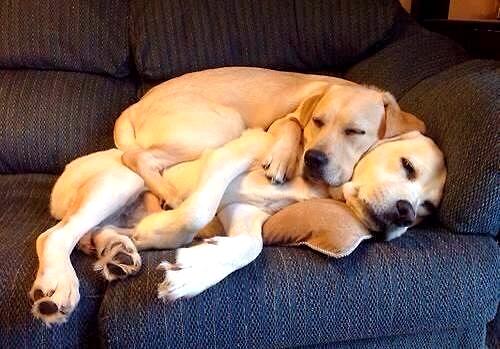 3.27.15 - Cutest Doggie Sleepovers19