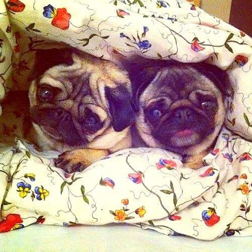 3.27.15 - Cutest Doggie Sleepovers2