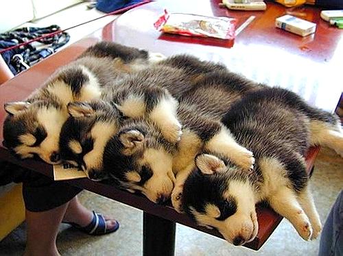 3.27.15 - Cutest Doggie Sleepovers20