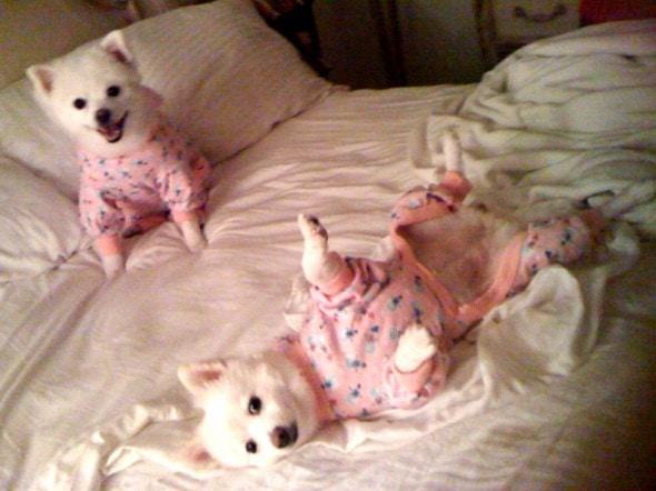 3.27.15 - Cutest Doggie Sleepovers22