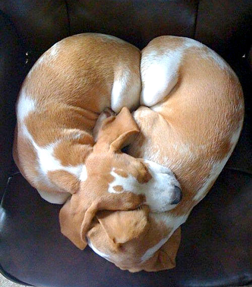 3.27.15 - Cutest Doggie Sleepovers24