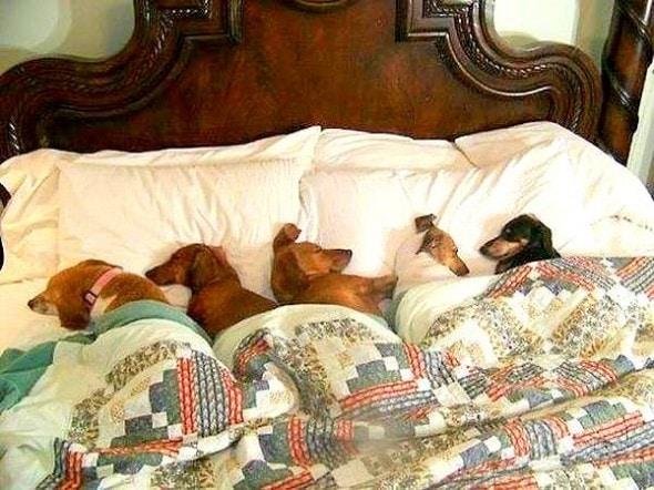 3.27.15 - Cutest Doggie Sleepovers25