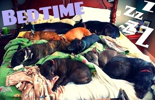 3.27.15 - Cutest Doggie Sleepovers26
