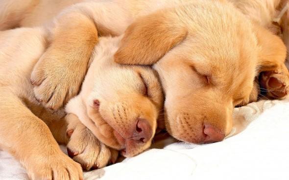 3.27.15 - Cutest Doggie Sleepovers4