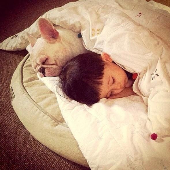 3.27.15 - Cutest Doggie Sleepovers5