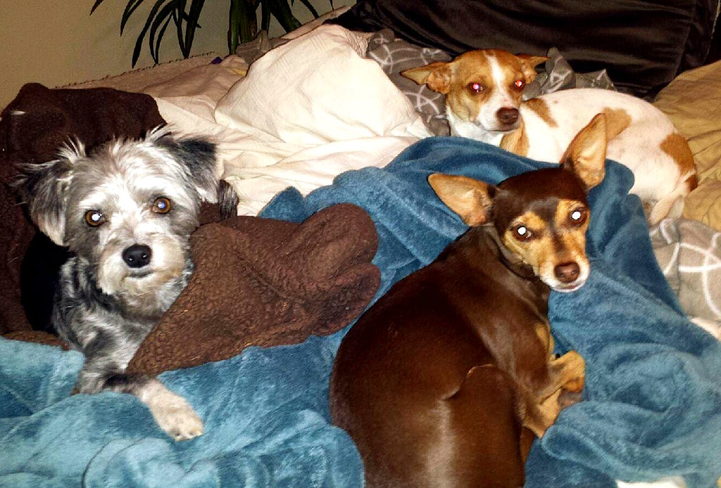 It S Doggie Sleepover Time Life With Dogs