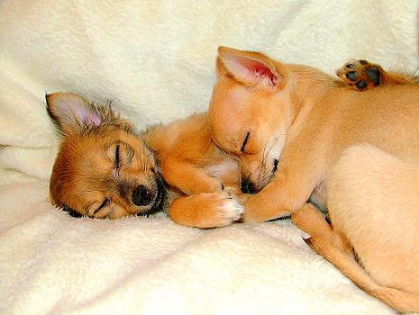 3.27.15 - Cutest Doggie Sleepovers7