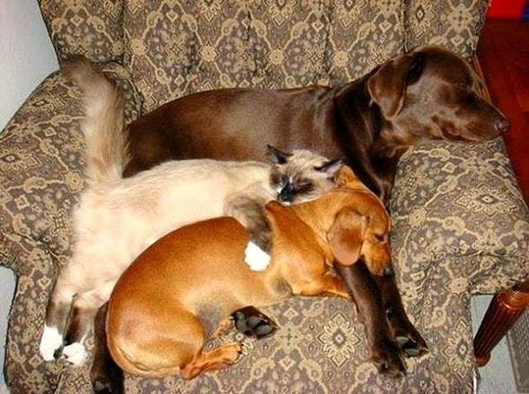3.27.15 - Cutest Doggie Sleepovers8
