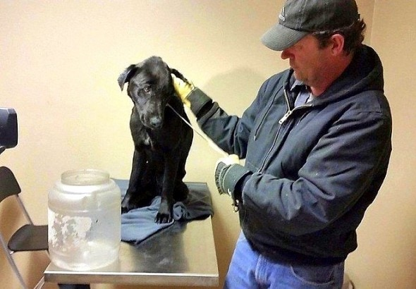 3.27.15 - Dog with Jug Stuck on Head for Weeks Rescued2