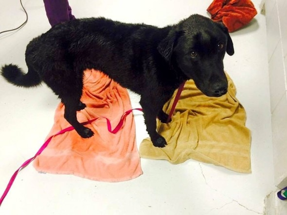 3.27.15 - Dog with Jug Stuck on Head for Weeks Rescued3