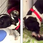 Pit Bull Is Inseparable from the Kitten Whose Life She Saved