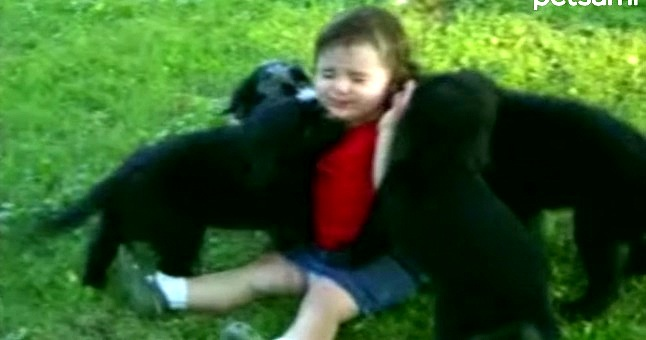 Toddler Gets Overwhelmed with Puppy Loving