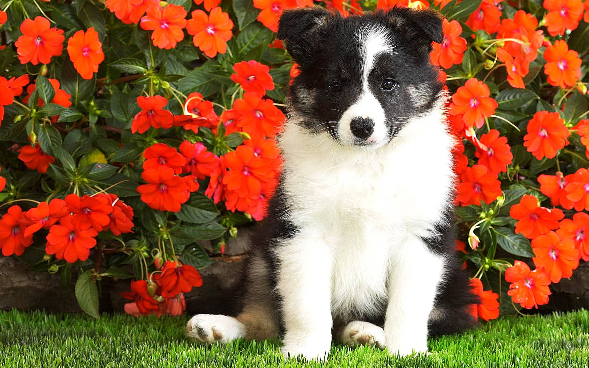 Eukanuba Puppy Food >> Dogs Who Couldn't Be More Delighted That Spring Is Here ...