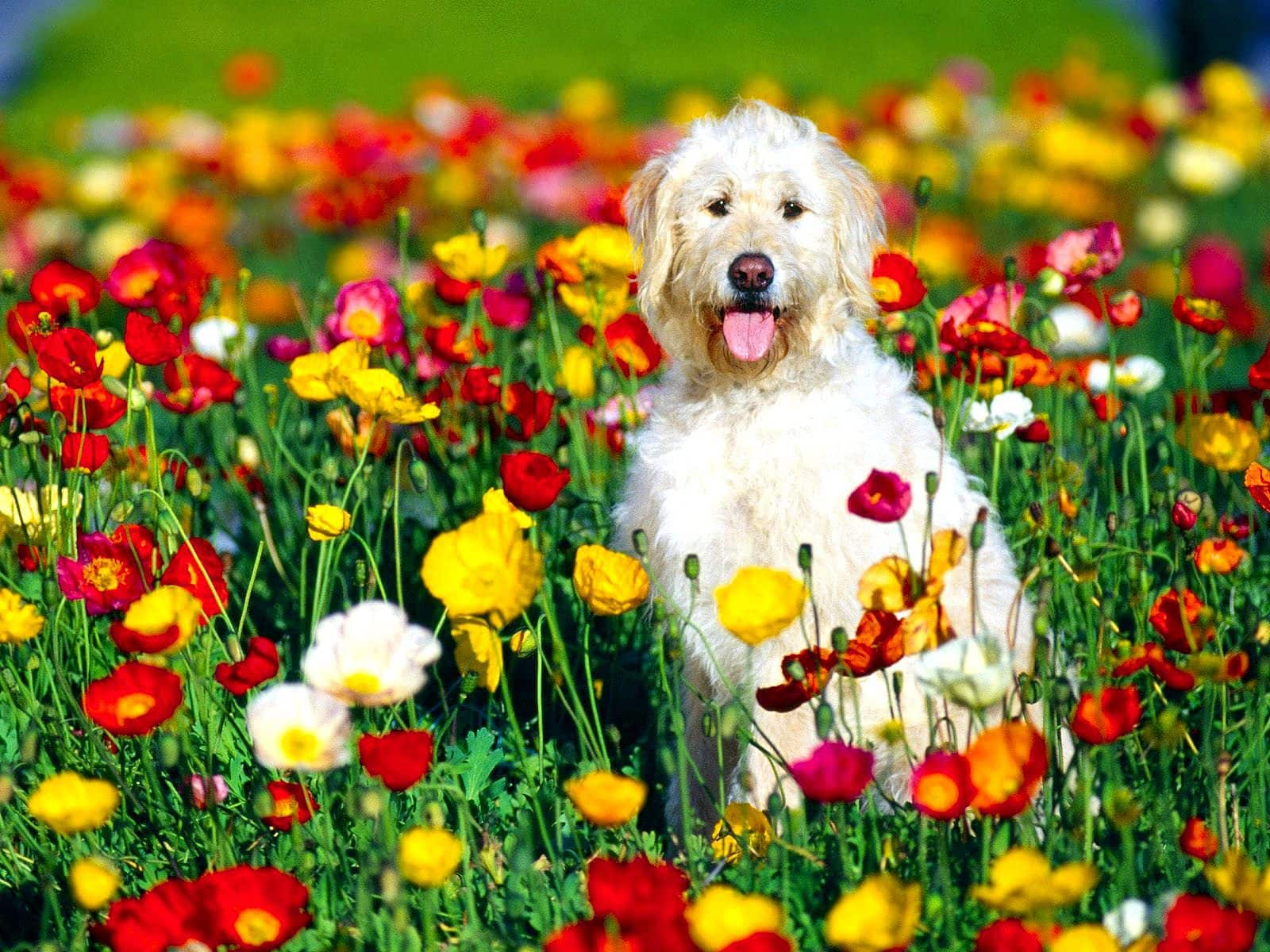 Image result for spring dog pictures