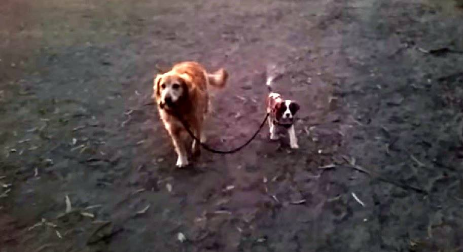 Big Sister Takes Little Brother for a Walk