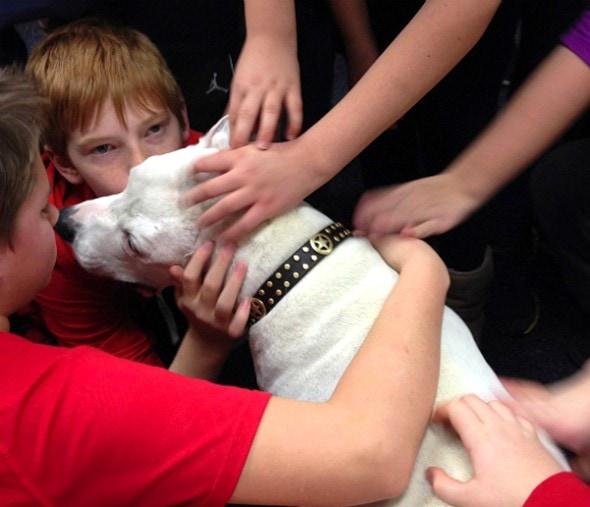 3.5.15 - Beloved Rescue Dog Oogy Has Died6