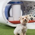 Samsung Builds $30,000USD Dog House with Hot Tub