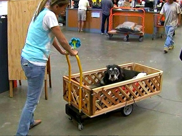 3.6.15 - Home Depot Employees Build Wagon for Senior Dog with Cancer4