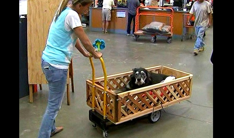 Home Depot Employees Build Wagon for Senior Dog with Cancer