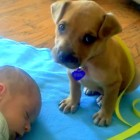 Puppy Wants to Watch Over Baby, But…