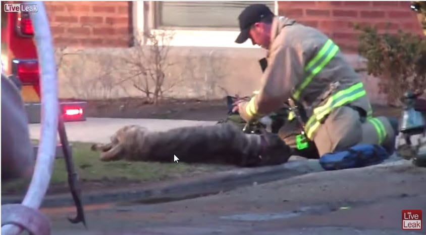 Hero Firefighters Pull Dog from Burning Home