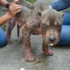 Brighter Future for Malnourished Dog Dumped at Shelter's Door