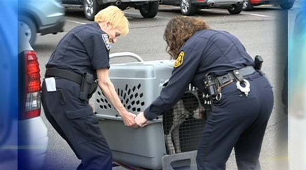 Dying Dogs Left in Attic Get Rescued Thanks to Anonymous Tip