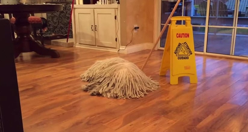Is That a Mop or a Dog?