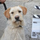 Movie Helps 250 Dogs Find Forever Homes