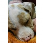 Animal Lovers Rush to Save Puppy Found Missing Front Leg