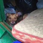 Awesome Dog Dumped inside Garbage Bin With All and His Bed