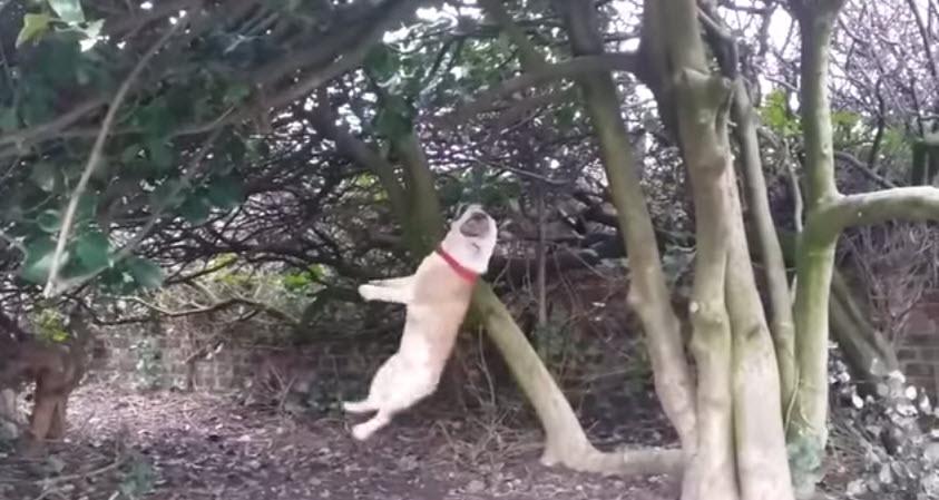 Dog vs. Tree Branch