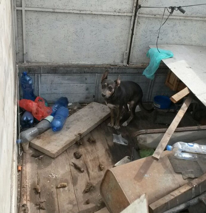 Authorities Rescue Dog Living in Back of Truck