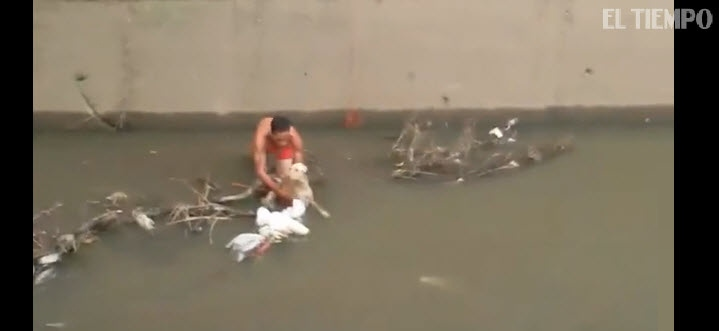 Man Jumps into Dirty Canal Waters to Save Stray Dog