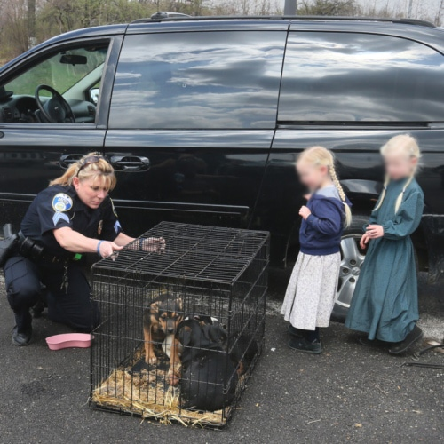 Police stops van transporting cage puppies on roof for Abc motor credit gilchrist rd