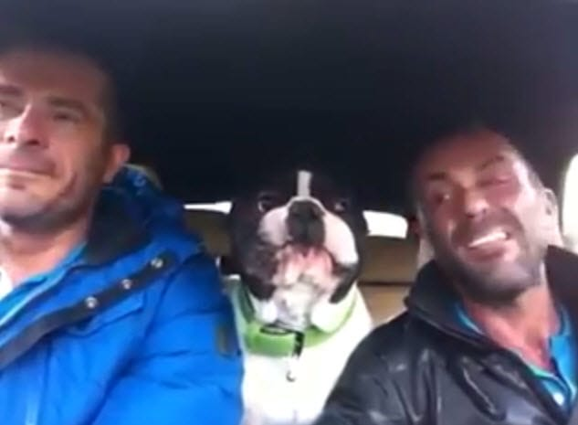 No One's Better Than a Singing Dog
