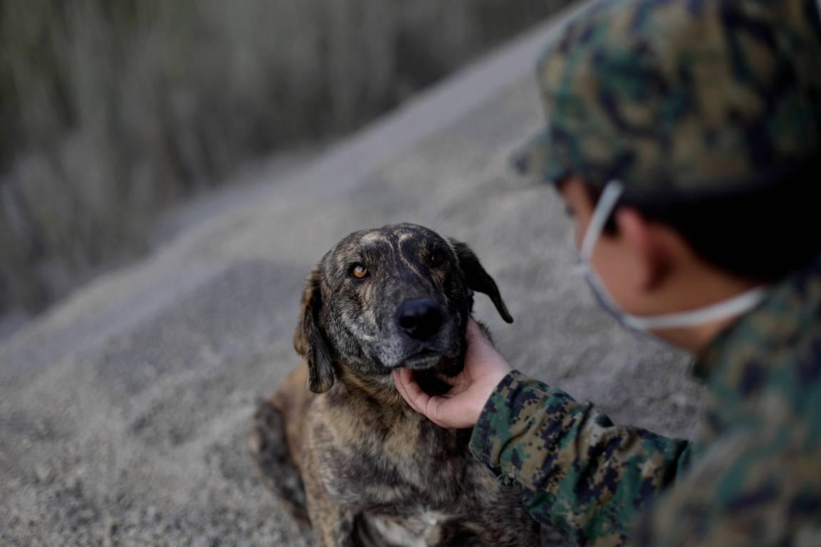 Stray Dog Keeps Calbulco Rescuers Company