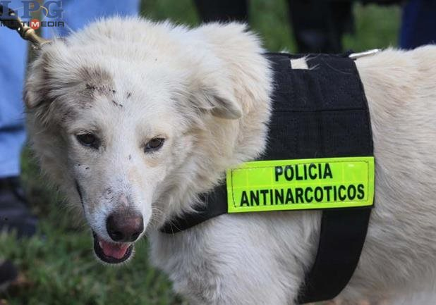 Stray Dog Saves Police Officers From Gang Attack