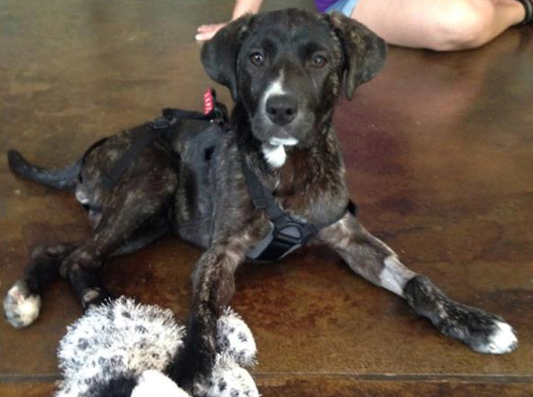 Thanks to Donations, Ivy  Will Walk Again