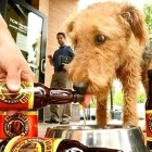 4.1.15 - A Beer You Can Share with Your Dog1