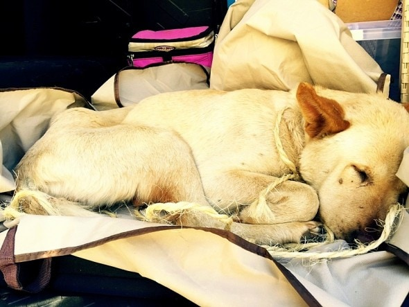 4.10.15 - Teenagers Save the Life of an Abandoned, Dying Dog3